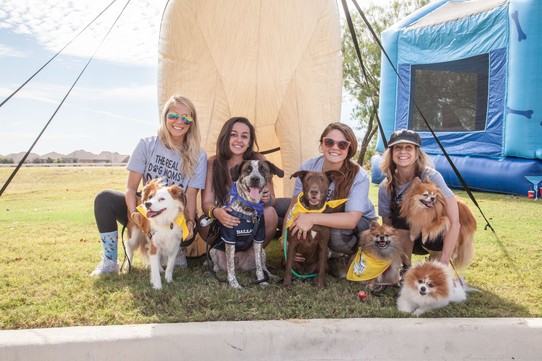 service dogs, DogFest Walk 'n' Roll, courtesy Canine Companions for Independence
