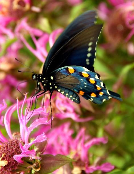 Native Texas Butterfly House & Garden, Heard