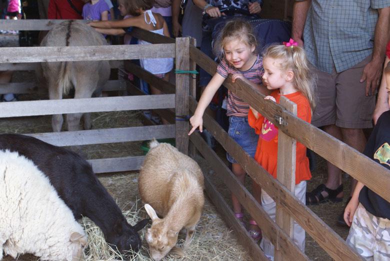 Petting zoo at Nash Farm