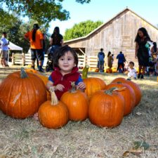 A.W. Perry pumpkin patch