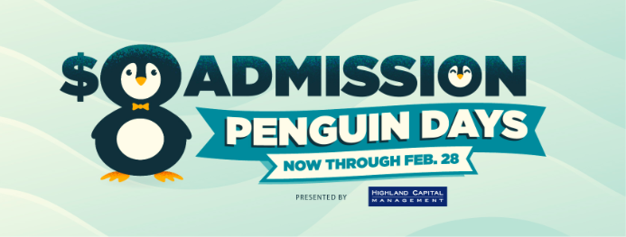 Dallas Zoo Penguin Days