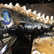 Places to go with kids in DFW, Perot Museum
