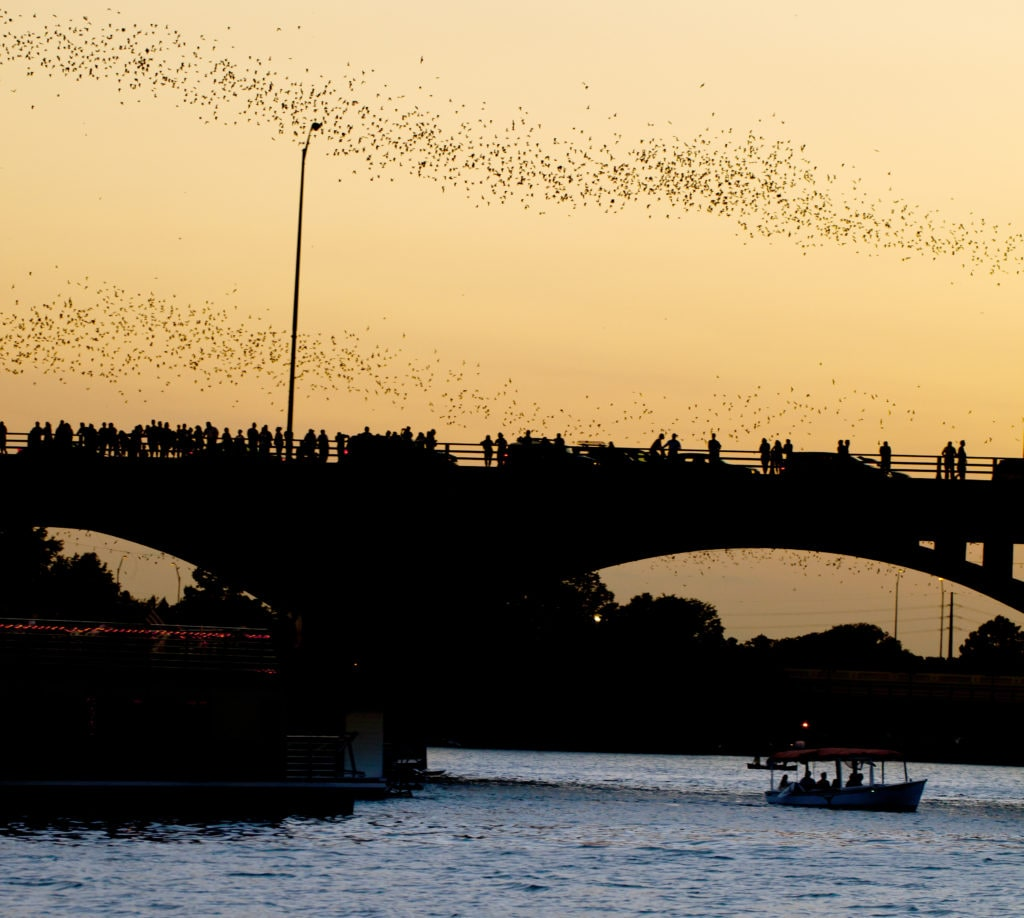 Bats at Congress Ave bridge in Austin