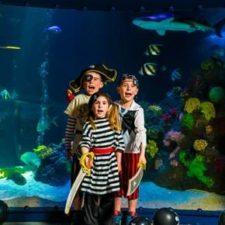Pirate Party, Sea Life Grapevine Aquarium