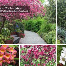 Dallas Arboretum Virtual Tours