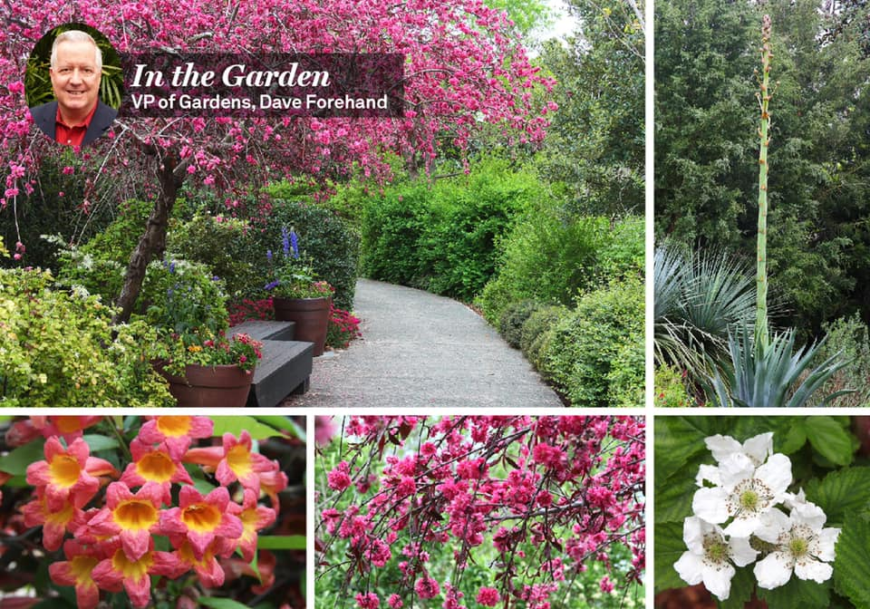 Dallas Arboretum Virtual Tours