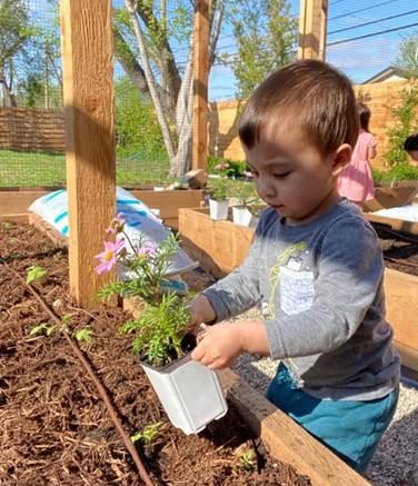 Surviving quarantine while gardening