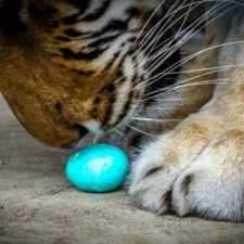 In-Sync Exotics' Virtual Easter Egg-stravaganza