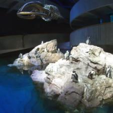 Live Web Cameras at New England Aquarium