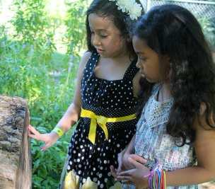 Garden STEM Lessons with the Arboretum