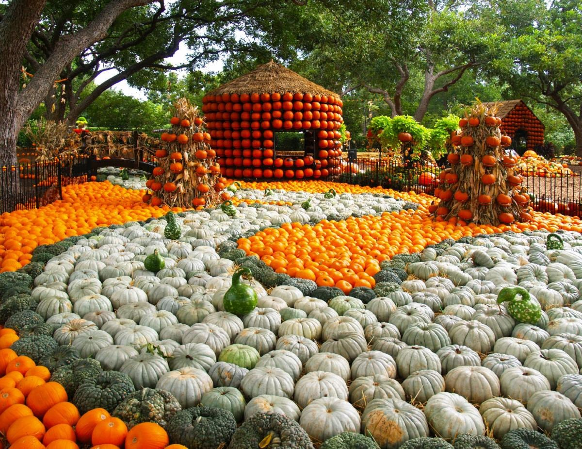 Autumn at the Arboretum: The Art of the Pumpkin