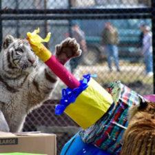 In-Sync Exotics Birthday Bash