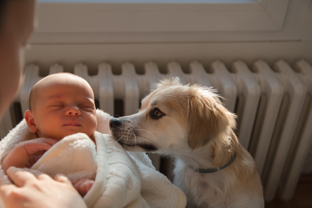 Introducing pet to new baby
