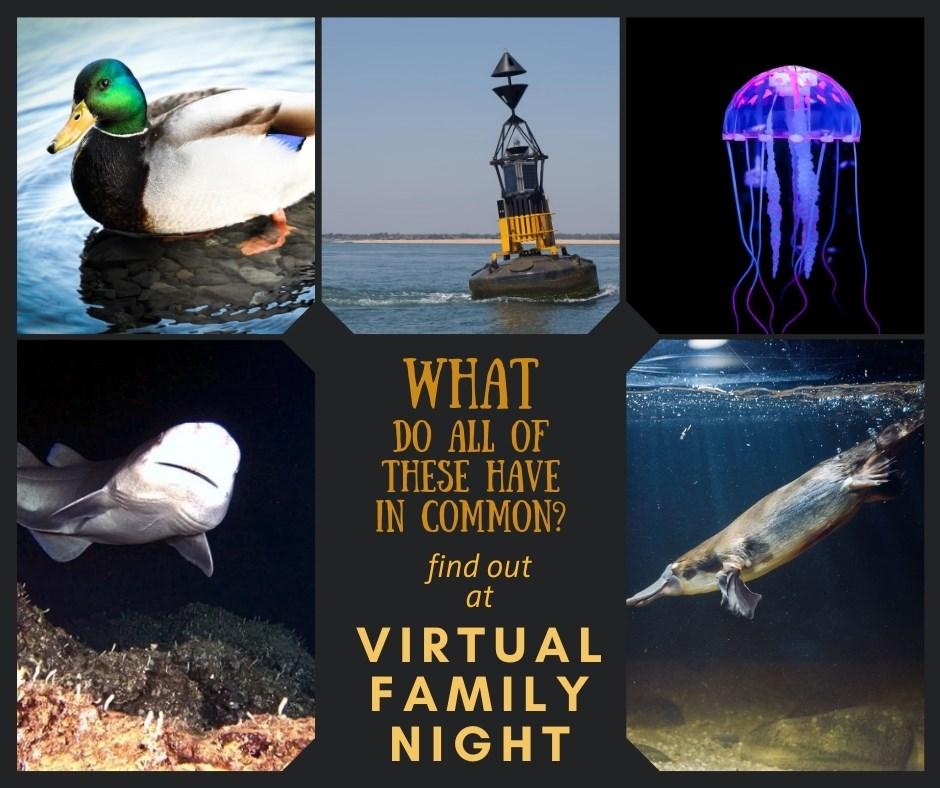 Virtual Family Night with Carrollton Public Library