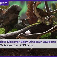 Paleontology Chat with Perot Curator