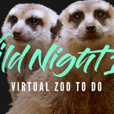 Dallas Zoo Wild Night In, Virtual Zoo To Do