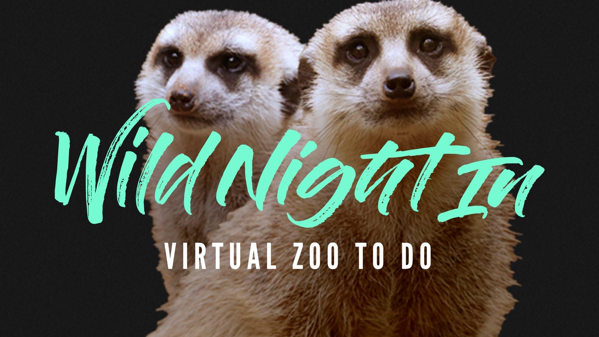 Dallas Zoo Wild Night In, Virtual Zoo To Do