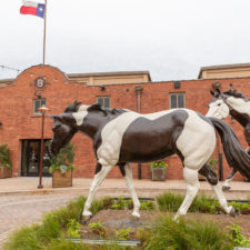 Mule Alley at Fort Worth Stockyards