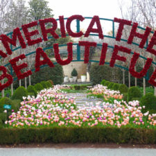 Dallas Blooms, America the Beautiful