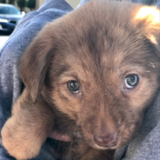 Trinity Coffee House Cups and Pups Event