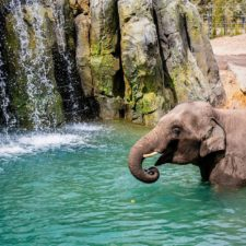 Elephant Springs, Fort Worth Zoo
