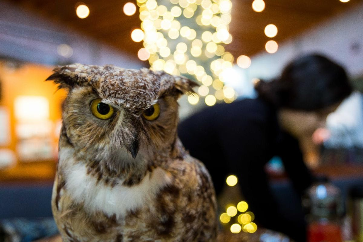 Owl Prowl: Night Hike at River Legacy