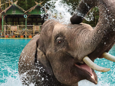 Fort Worth Zoo elephant