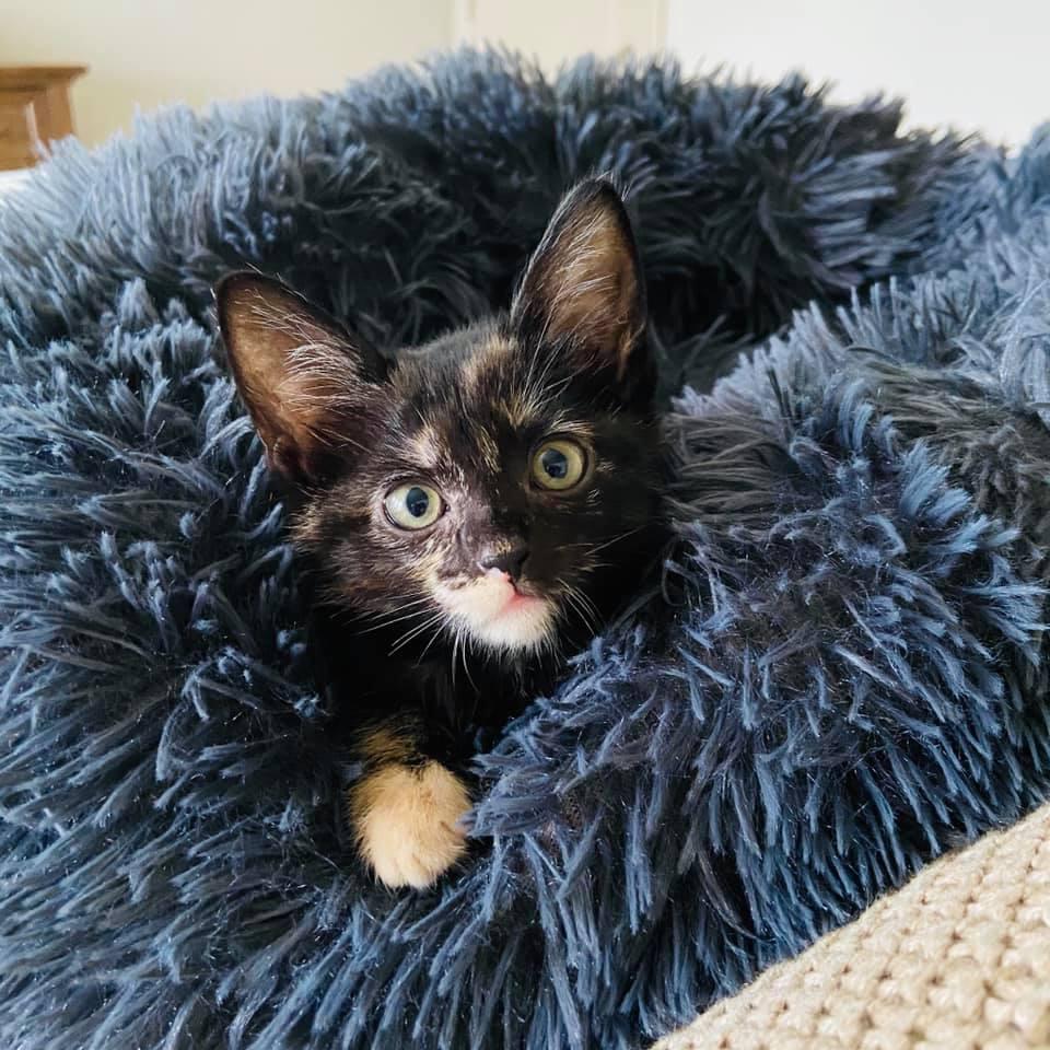 Kitten Palooza at Operation Kindness