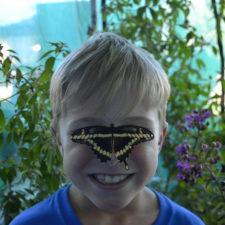 Kiwanis Butterfly Festival, Southlake Town Square