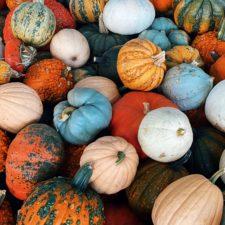 Pumpkin Day at Dallas Farmers Market