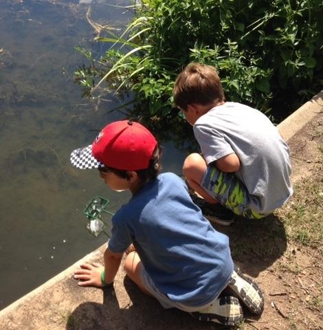 summer pond catch 2 1