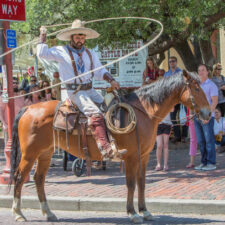 Photo courtesy of Fort Worth Convention & Visitors Bureau, twice-daily cattle drive, things to do in dallas with kids/near me