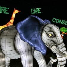 Dallas Zoo Lights, photo courtesy of Dallas Zoo